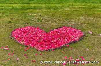 Someone's been leaving beautiful flower-petal hearts around West Vancouver [PHOTOS] - Vancouver Is Awesome