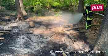 Trockenheit: In Hofheim hat Wald schon gebrannt - Wiesbadener Kurier