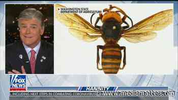 "Sean Hannity asks if invasive murder hornets are ""the next corona"" - Media Matters for America"