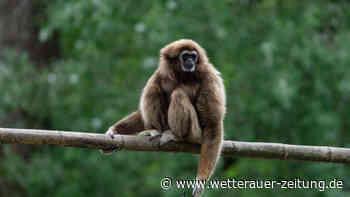Corona-Lockerungen: Der Opel-Zoo in Kronberg macht wieder auf – Alle Informationen | Rhein-Main - Wetterauer Zeitung