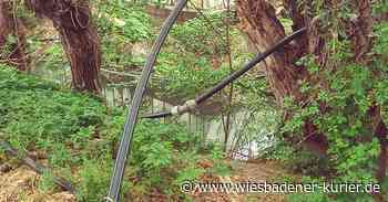 Anwohner soll bei Biebrich Wasser aus Mosbach gepumpt haben - Wiesbadener Kurier