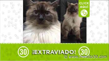 Buscan a este gatico en Guayabal - Minuto30.com