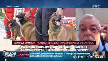 A Maisons-Alfort, des chiens entraînés à détecter le coronavirus chez l'homme - BFMTV.COM