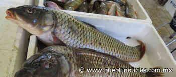 Club de Pesca de Chignahuapan se une a la Cadena de Solidaridad; donará carpas a familias vulnerables - Puebla Noticias