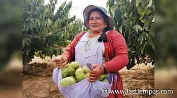 """Comienza la cosecha de chirimoya en la planta """"Mayra"""" de Mizque - Los Tiempos"""