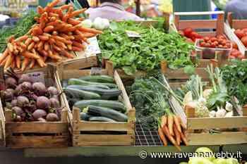 Cotignola: riapre il mercato settimanale in piazza Vittorio Emanuele II - Ravennawebtv.it