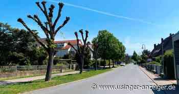 In Usingen bekommen selbst die Bäume die Köpfe geschnitten - Usinger Anzeiger