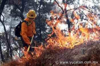 Más de cien bomberos combaten un incendio forestal en Bacalar - El Diario de Yucatán