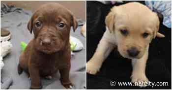 9 Puppies & Injured Mom Were Just Rescued In BC And They'll Be Ready To Adopt Soon - Narcity Canada