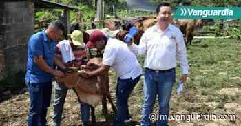 Los ganaderos de Charalá y Coromoro fueron beneficiados con proyecto de mejorameinto genético - Vanguardia Liberal