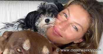 Gisele Bundchen Shares Beautiful Makeup-Free Selfie With Her Dogs - Closer Weekly