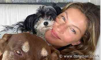 Gisele Bundchen showcases gorgeous makeup free complexion as she cuddles up to her dogs - Daily Mail
