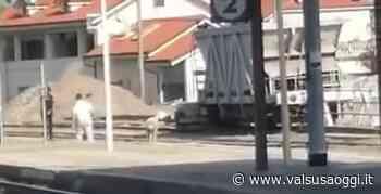 VIDEO / AVIGLIANA, LA PECORA SCAPPATA IN STAZIONE RECUPERATA DAI VIGILI URBANI - ValsusaOggi