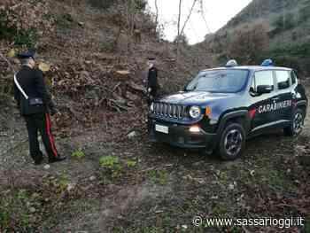 Ittiri, beccati a rubare legna nella proprietà di un invalido, 3 arresti - Sassari Oggi