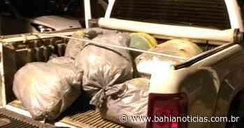 Senhor do Bonfim: Mais de 200 kg de maconha são apreendidos; três homens foram presos - Bahia Noticias - Samuel Celestino