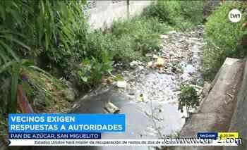 Noticias Mortandad de peces en Pan de Azúcar - TVN Panamá