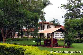 Escola Agrícola de Palotina é destaque em acesso ao Google Classroom - Aquiagora.net