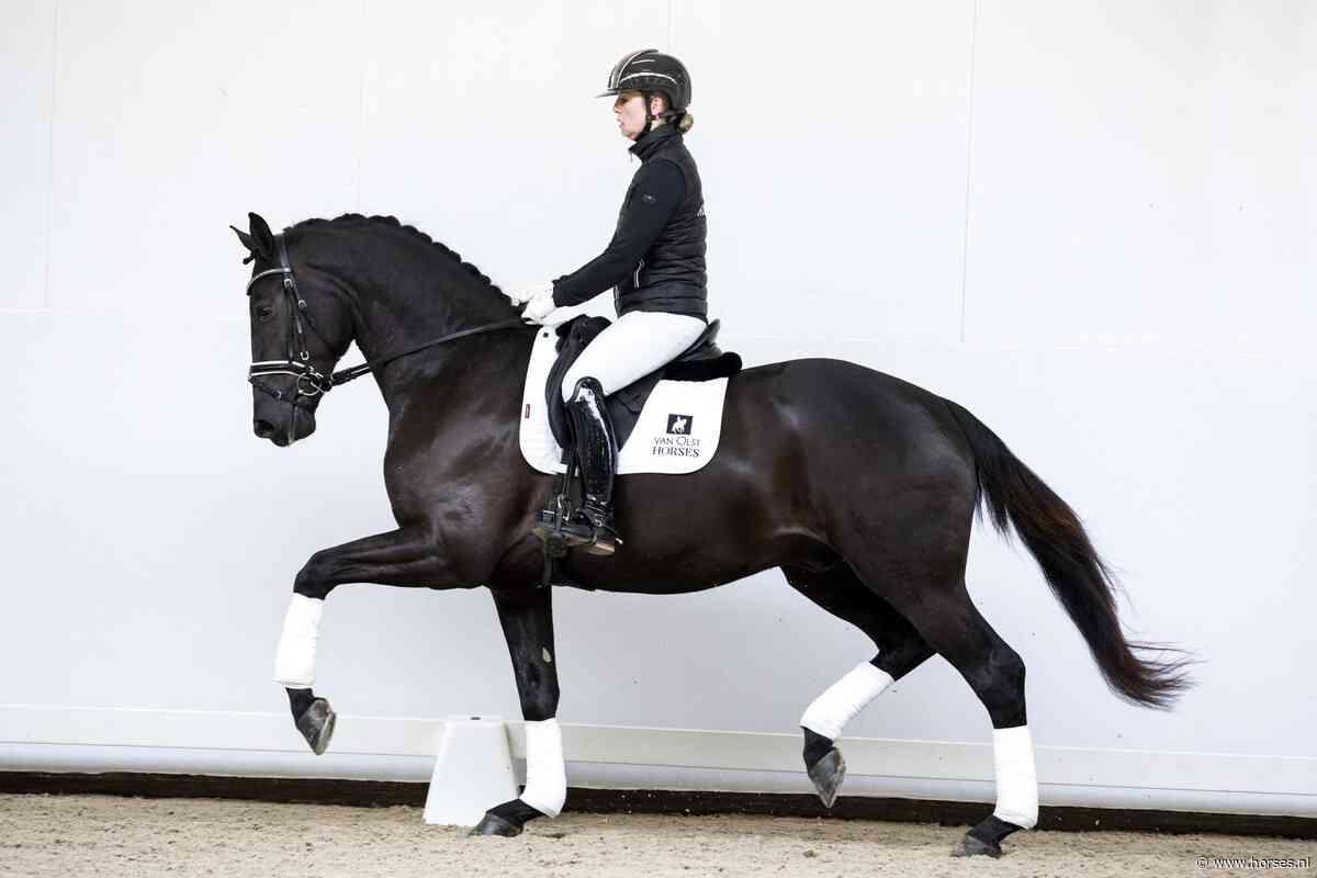 Van Olst Sales breidt uit en gaat 'online' - Horses.nl