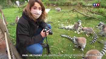 Confinement : les animaux ont pris le pouvoir au parc de Thoiry - LCI