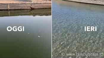 Lago Patria, in 24 ore il mare torna inquinato. Video - Teleclubitalia.it