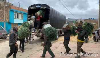 Campesinos de Aquitania, Cuitiva y Tota donarán 50 toneladas de papa y cebolla a bogotanos - W Radio