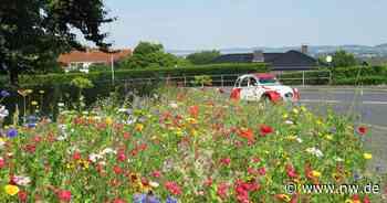 Farbenprächtige Blumenwiesen: Bad Oeynhausen blüht auf - Neue Westfälische