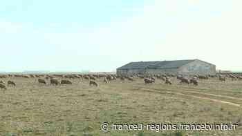 PrioriTerre à Saint-Martin-de-Crau : la réserve des Coussouls de Crau - Franceinfo