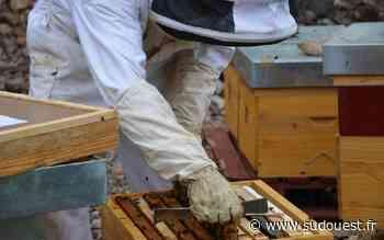 Saint-Jean-Pied-de-Port : Ezti Etxea propose des initiations à l'apiculture - Sud Ouest