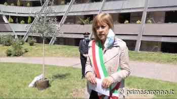 A Castellanza un ulivo per tutti i defunti in questi due mesi di emergenza Covid - Varese Settegiorni