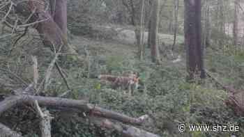 Harrislee: Was die Corona-Krise für Jagd und Natur bedeutet   shz.de - shz.de