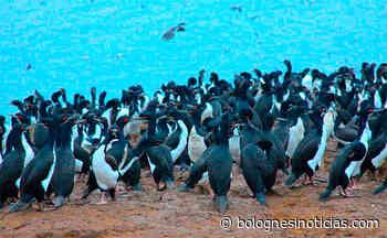 Áncash: Hallan Más 400 Aves Marinas Muertas En Huarmey Presuntamente Para Consumo Humano - Bolognesi Noticias - Bolognesi Noticias