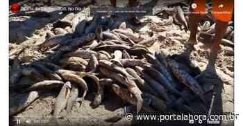 VÍDEO: Pescadores artesanais capturam centenas de tainhas em praias de Garopaba, Imbituba, Jaguaruna e de vários municípios do Estado - Portal AHora