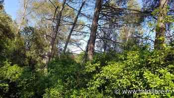 Castelnau-le-Lez : petit rappel des règles relatives au nécessaire débroussaillement - Midi Libre