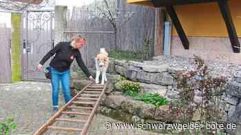Dotternhausen: Rettungshunde trainieren auch in Corona-Zeiten - Dotternhausen - Schwarzwälder Bote