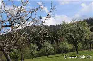 Blütenfestival auf Streuobstwiesen: Nicht nur in Dotternhausen gibt's eine wahre Farbenpracht - Zollern-Alb-Kurier
