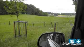 Lindenberg macht sein Ding im Autokino auf Esborner Wiese - Westfalenpost