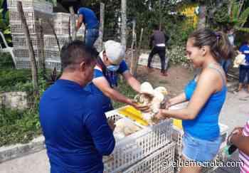 Julio Ortega entrega pollos a familias vulnerables de Catemaco - El Demócrata