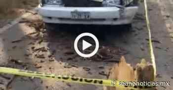VIDEO: Fallece taxista tras caerle un árbol en la Toluca-Zitacuaro - SéUnoNoticias