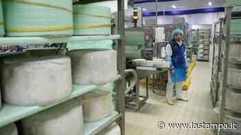 Gorgonzola, l'allarme delle aziende novaresi: crolla la produzione con il -17% ad aprile - La Stampa