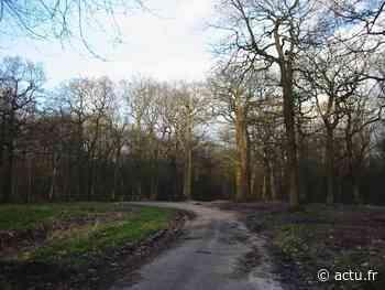 Hauts-de-Seine. Meudon, Malmaison, Fausses-Reposes... les forêts à nouveau accessibles - actu.fr