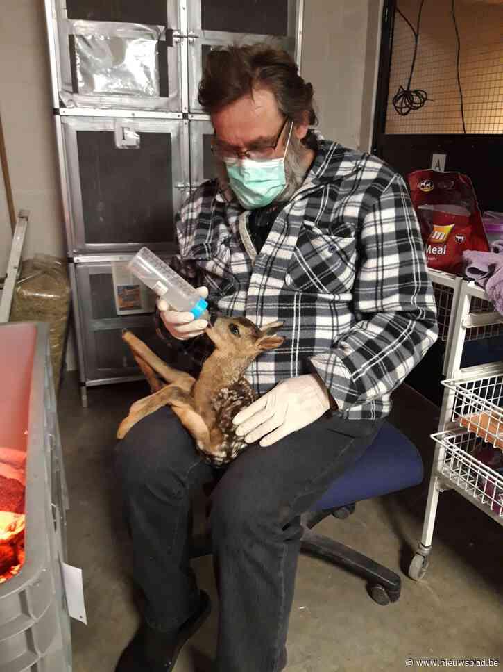 """Twee reekalfjes sterven na zoveelste incident met loslopende honden in Burreken: """"Desnoods sluiten we het natuurgebied"""""""