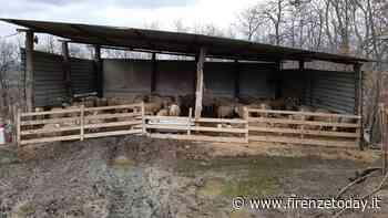 Gambassi Terme: abusi edilizi e smaltimento illecito di carcasse ovine - FirenzeToday