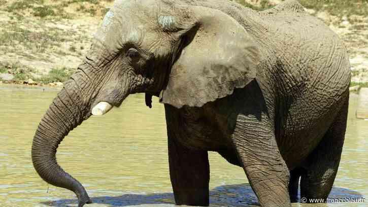 """""""La relance éco"""" : à Thoiry, le parc zoologique va rouvrir en partie ce samedi - France Bleu"""