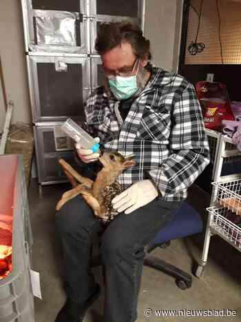 """Twee reekalfjes sterven na zoveelste incident met loslopende honden: """"Desnoods sluiten we het natuurgebied"""""""