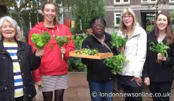 Vulnerable people in Lambeth given seeds to grow their own vegetables during coronavirus crisis - London News Online