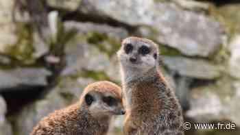 Schließung trifft Kronberger Opel-Zoo hart | Kronberg - Frankfurter Rundschau