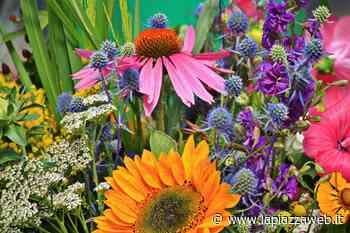 Al mercato del giovedì si aggiunge l'area fiori - La Piazza