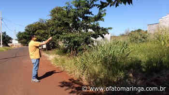 DENGUE: Prefeitura de Marialva notifica proprietários de terrenos irregulares - O FATO MARINGÁ - AGÊNCIA DE NOTÍCIAS ONLINE