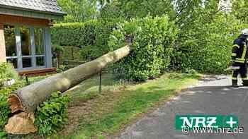Bedburg-Hau: Baum stürzte in Silke Gorißens Vorgarten - NRZ