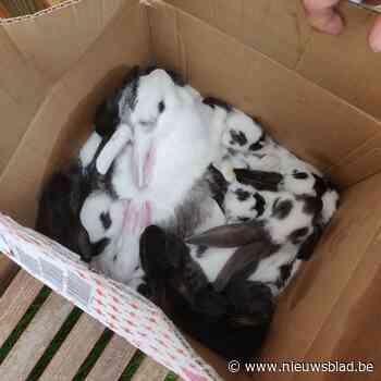 Politie vindt doos met pluizige inhoud langs de weg: veertien konijntjes gedumpt